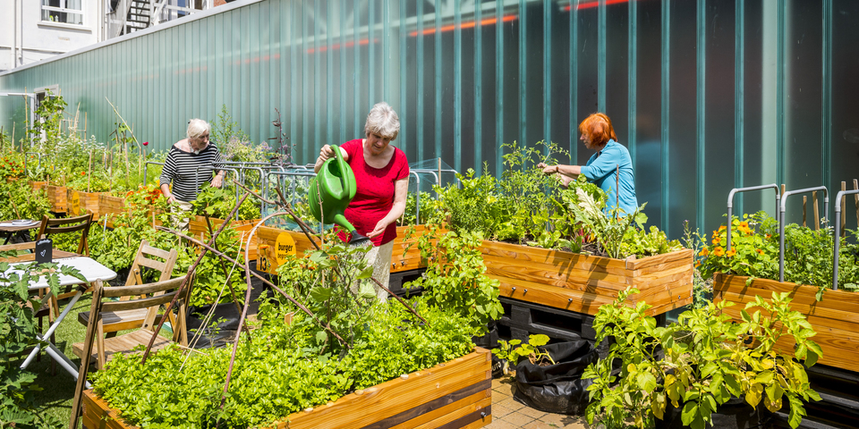 Tuiniers samen aan het tuinieren in samentuin Kavka