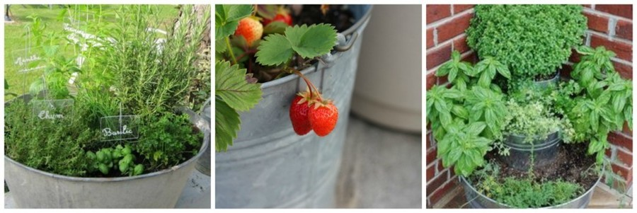 Zinken teilen worden vaak gebruikt om in te telen. Was de teilen goed uit en plaats een folie of worteldoek om de planten te beschermen. De planten nemen zink op via de wortels en dus kies je best voor bladgroenten (of kruiden): liever aardbeitjes dan worteltjes.