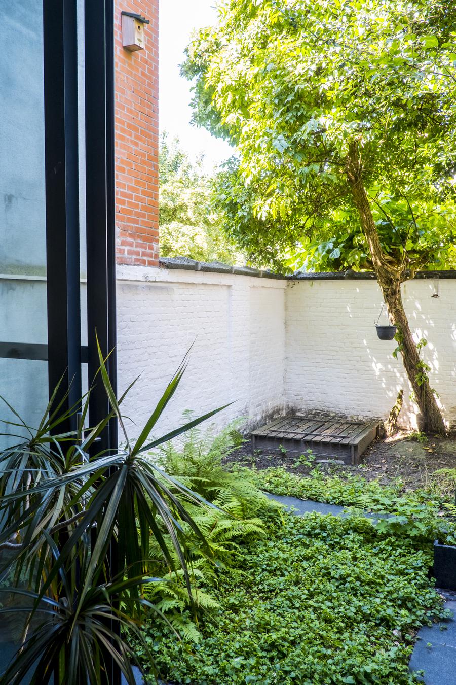laag groen, een boom, witgekalkte muur