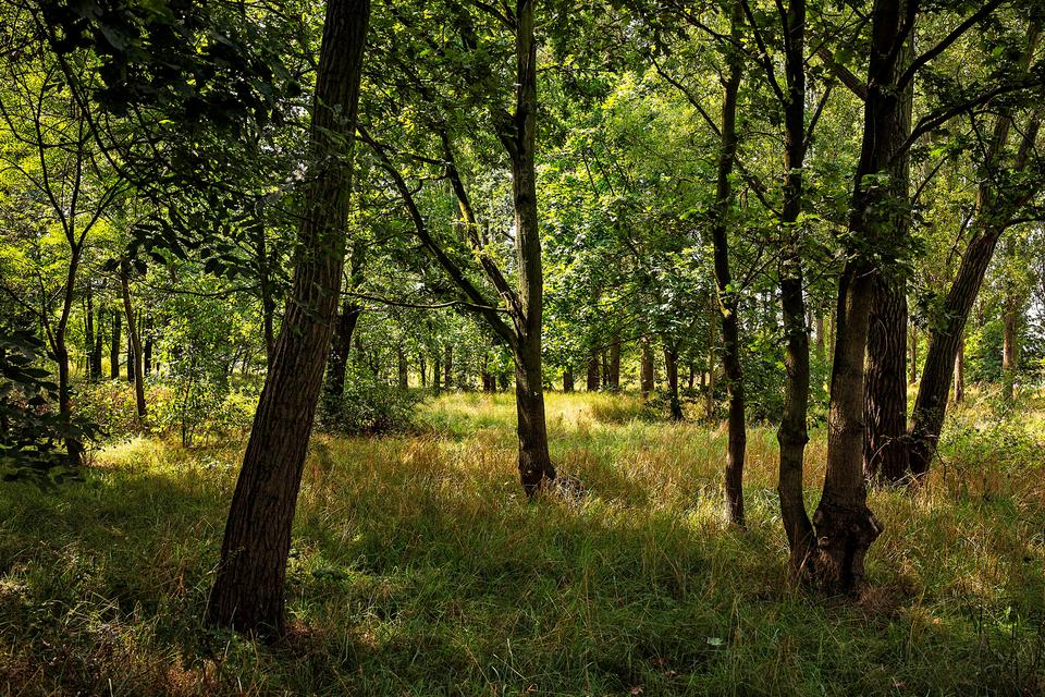 Bomen in het Reigersbos, Berendrecht