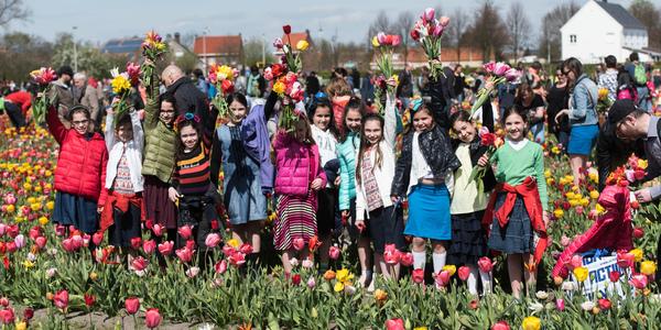 De Tulpenpluk op 17/4 in Berendrecht