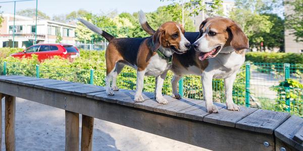foto van 2 honden in een hondenspeeltuin