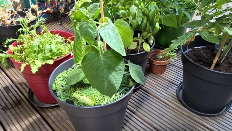 zelf groenten kweken water geven