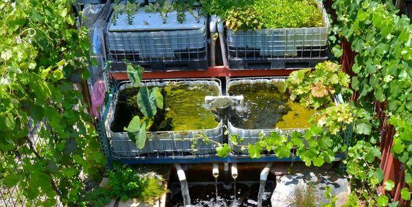 Voorbeeld van een aquaponics-installatie