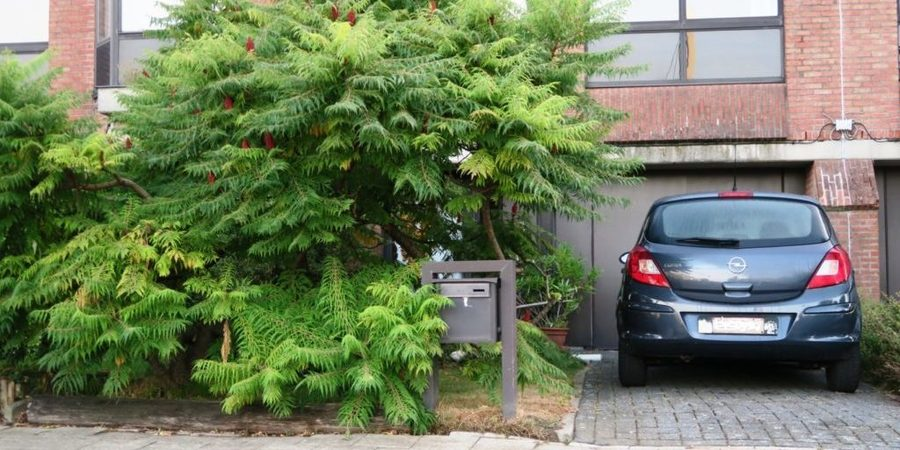 Een meerstammige boom kan hier perfect in staan. Privacy achter de glazen voordeur verzekerd.