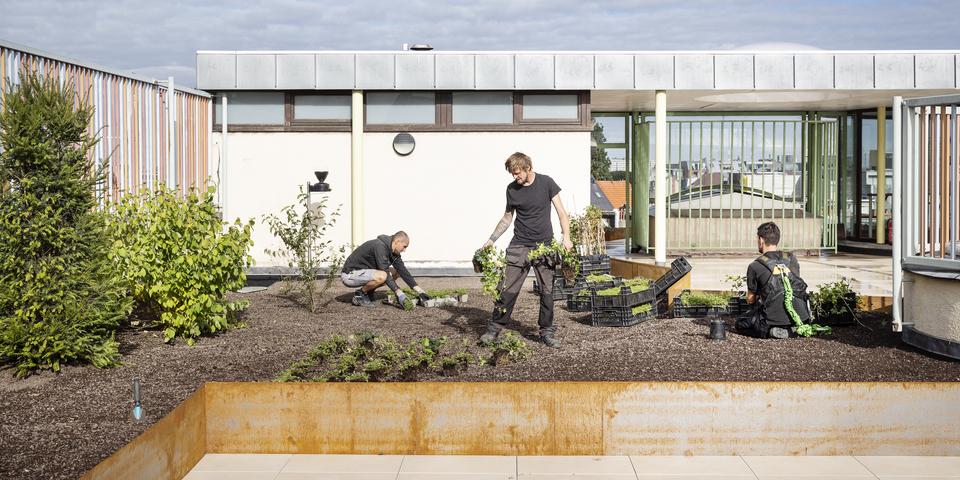 Mannen leggen een toegankelijk groendak aan op een school.