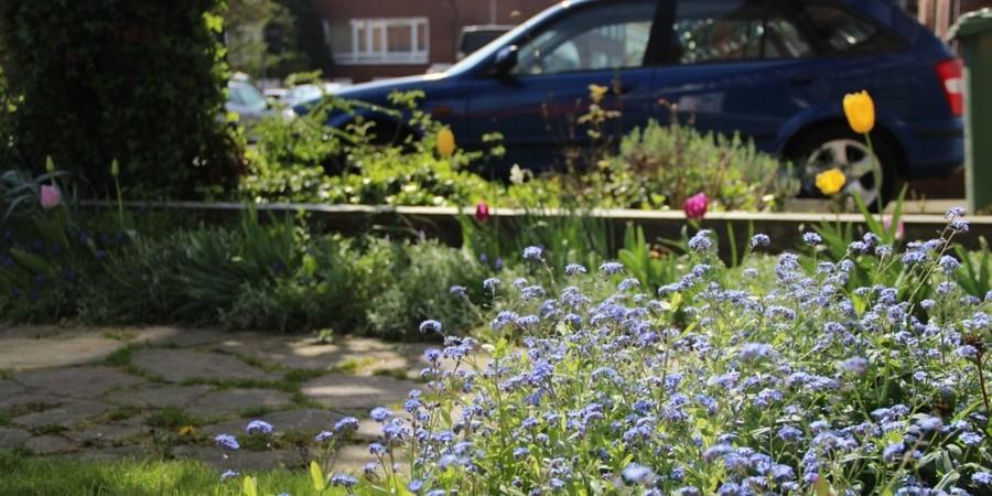 In deze smalle strookjes bloeien vergeet-me-nietjes, tulpen en blauwe druifjes. Andere vaste planten maken zich klaar voor hun bloei later in het seizoen. Tussen de stapstenen van het pad groeit er gras.