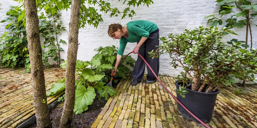 verharde koer met waterdoorlatende voegen tussen de stenen en een opening voor een boom en planten