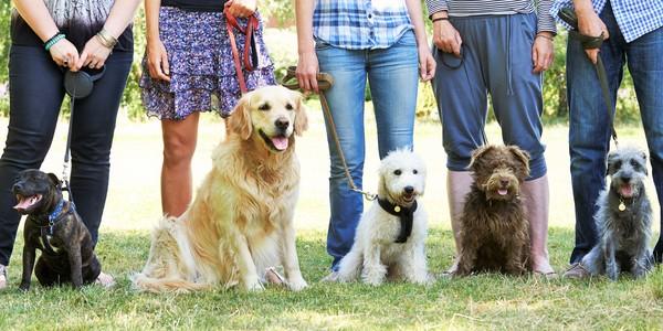 Honden met hun baasjes