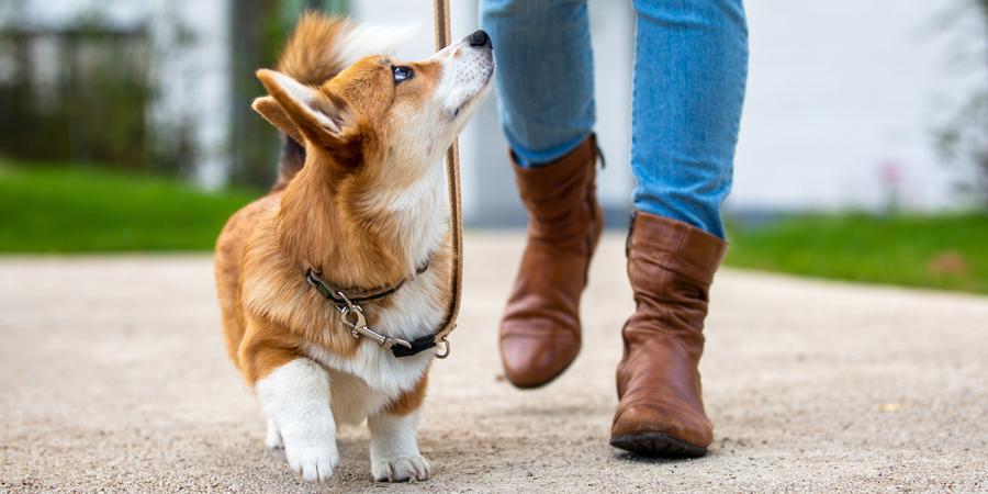 hond kijkt naar baasje