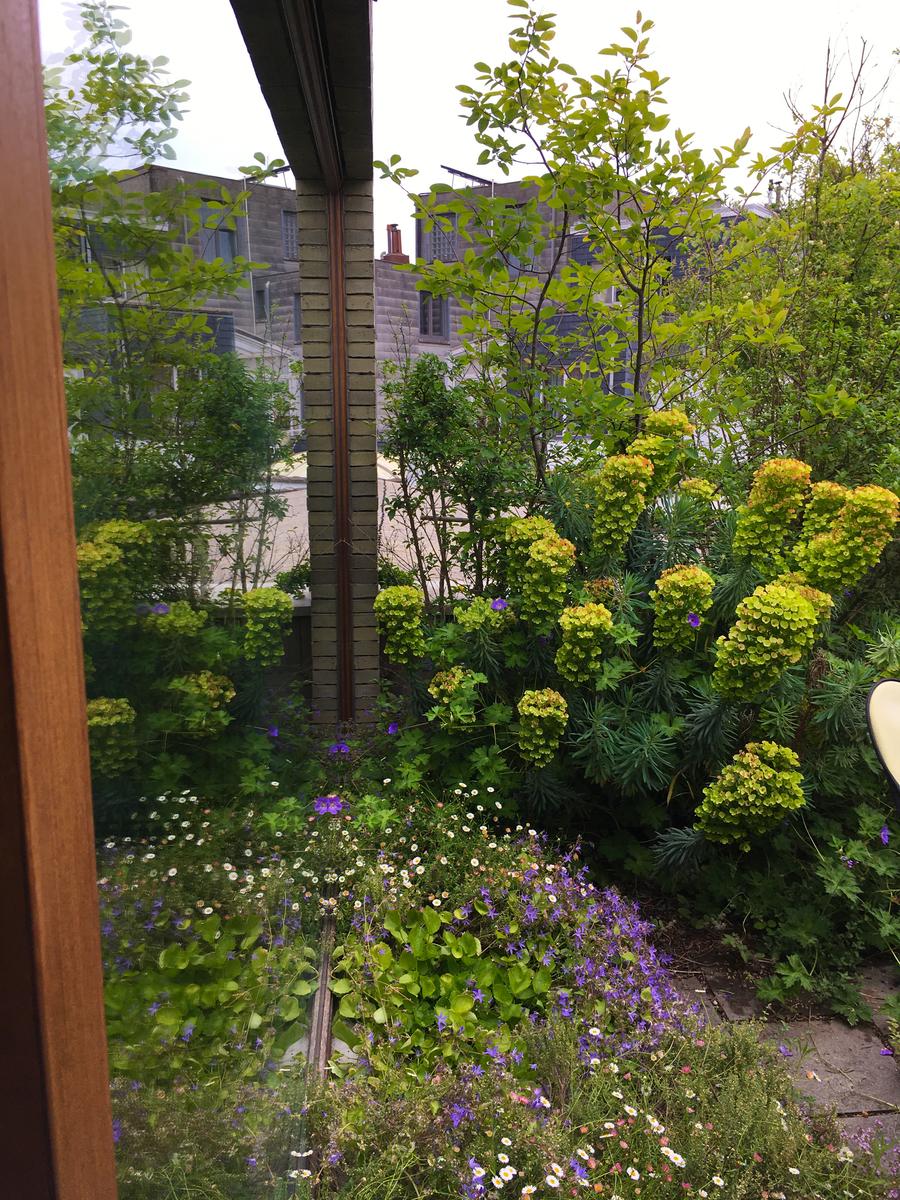 gele en paarse bloemen aan de tuinkamer