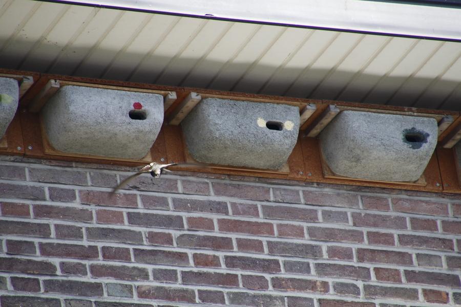 Nestkastjes bewoond door de gierzwaluw.