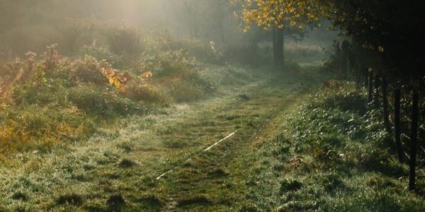 Weg vol gras in een Poldergebied
