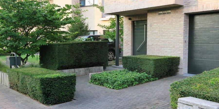 Speelse blokken van groen in verschillende hoogtes en breedtes. De meerstammige boom breekt het strakke architectonisch beeld.