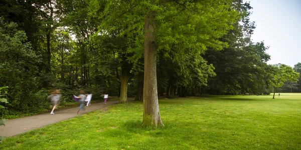 foto van een boom in Boelaarpark