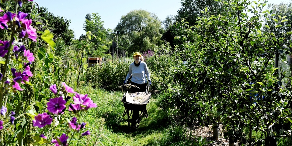 Dame met kruiwagen tussen planten en bloemen