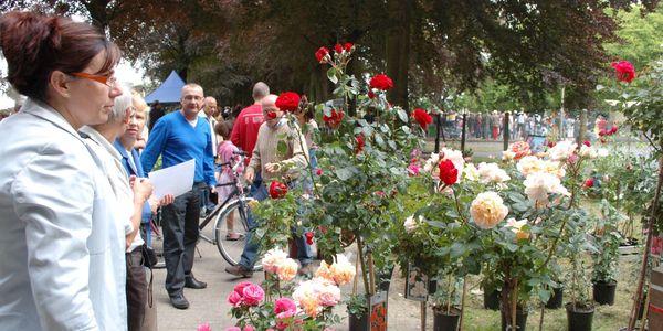 Dagje Deurne met rozen, kunst en fietsplezier