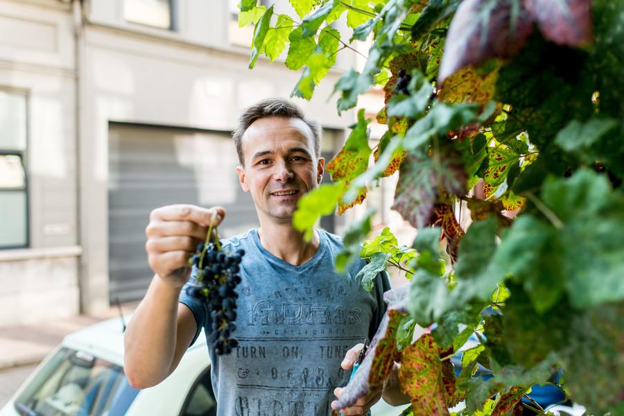 Borgerhoutenaar Patrick en de druiven van zijn druivelaar aan de gevel