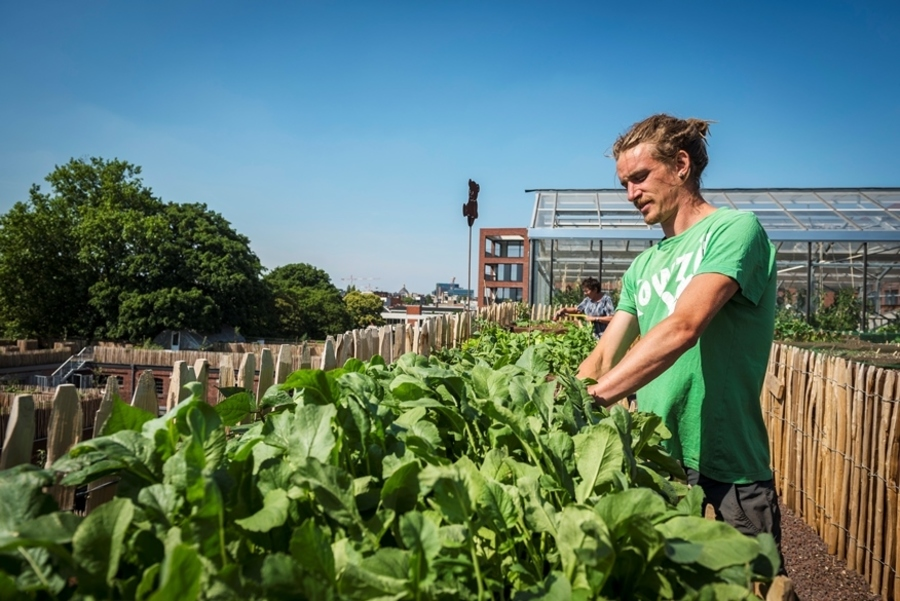 Bioboer Sjarel van Volle Grond in actie op 't dak van 't PAKT