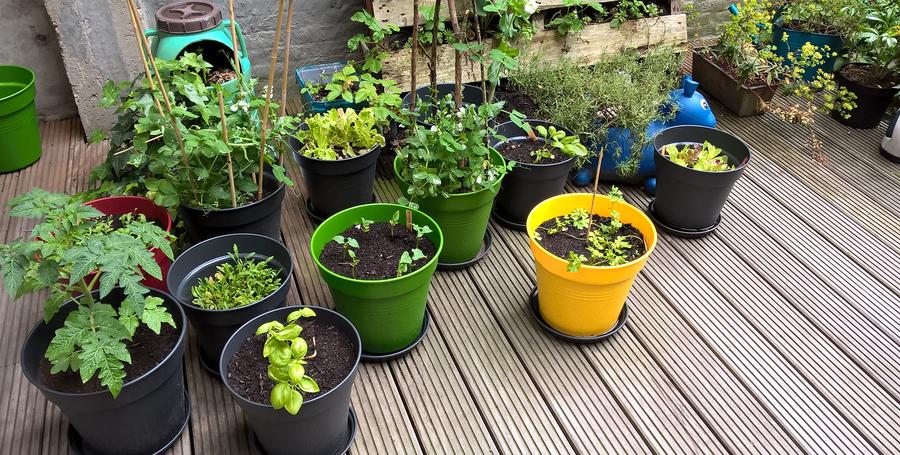 verschillende kruiden en groenten die gekweekt worden in potten op het terras