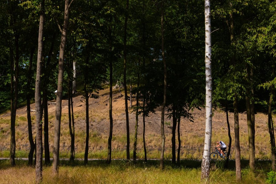 Hoge bomen en een fietser