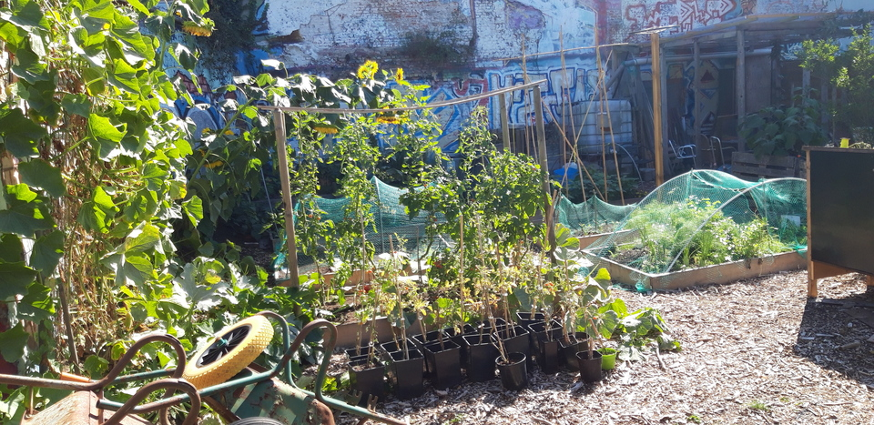 Tuin tussen muren
