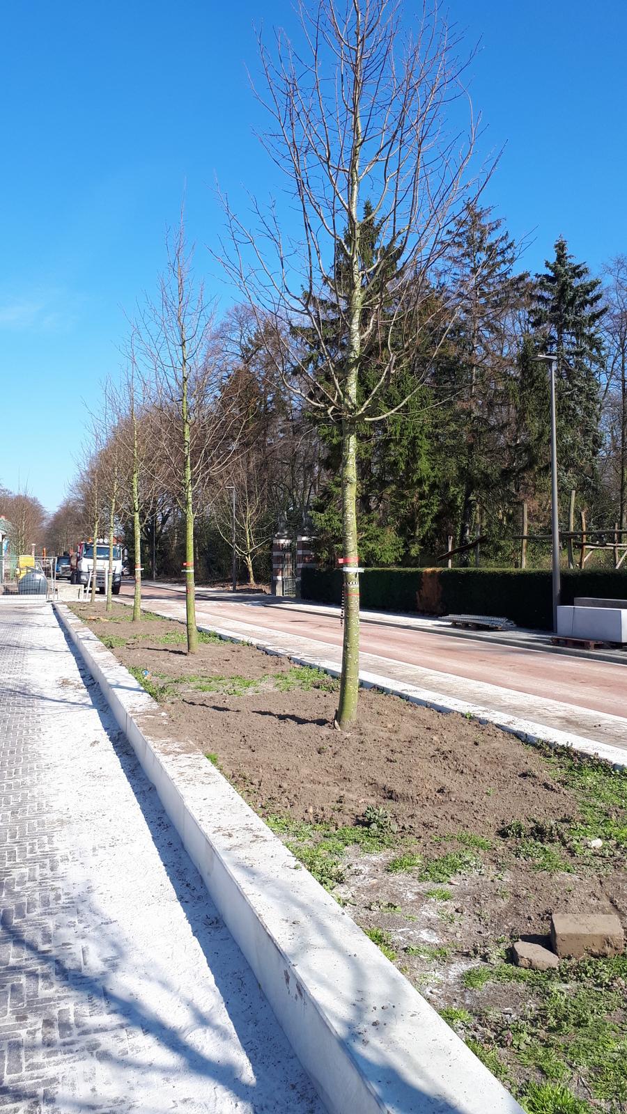 Bomen Speelpleinstraat