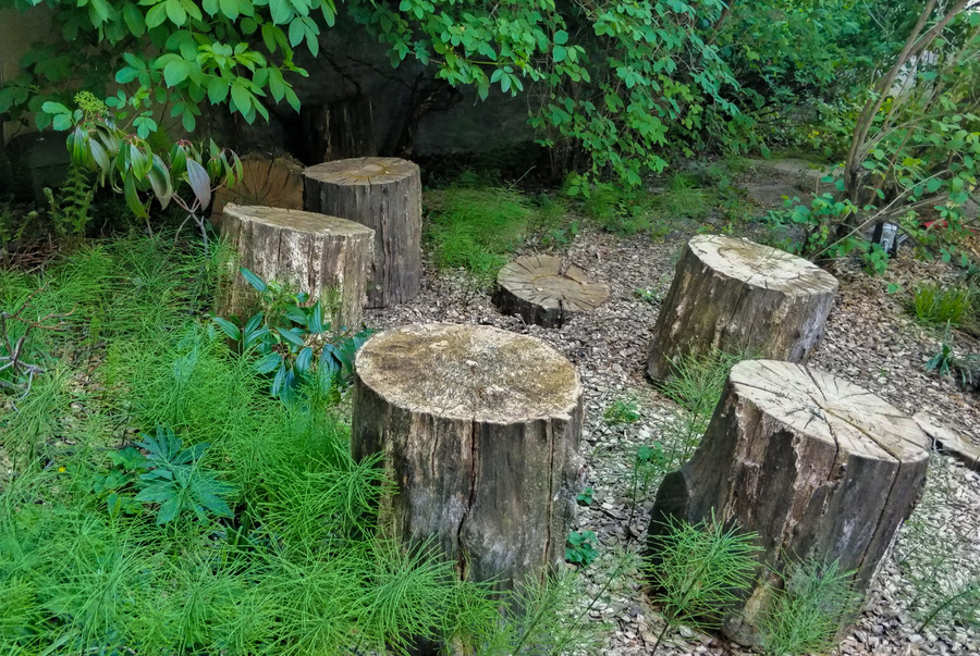 Boomstammen staan in een cirkel in een groen plek onder overhangende takken.