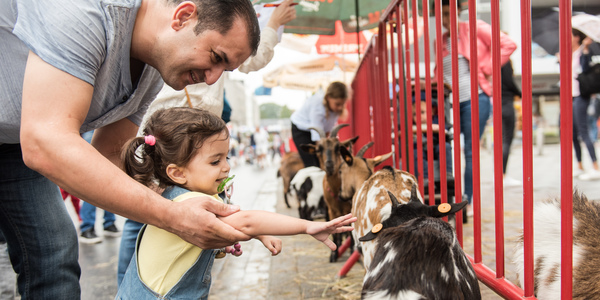 Een kindje streelt een geitje op de Wilrijkse jaarmarkt.