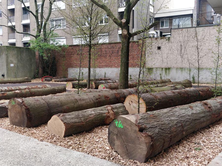 Oude boomstammen, jonge boompjes, schors en lavapaadjes vormen het nieuwe voorplein van het EcoHuis.