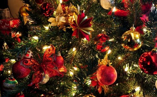 Deurne biedt een gratis kerstboom aan