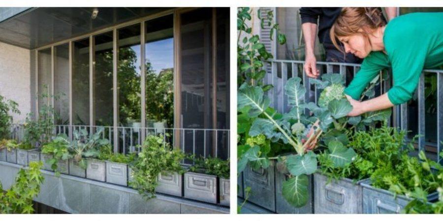 Het tweede terras, gericht op het noord-westen, krijgt voldoende zon om er zelfs tomaten te kweken. Hier groeien de planten in tweedehands magazijnbakken uit zink.