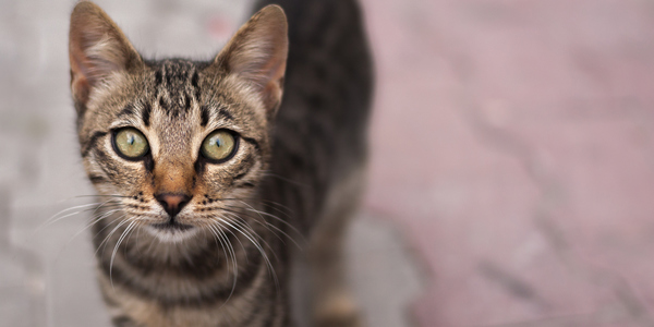Een kat op straat.