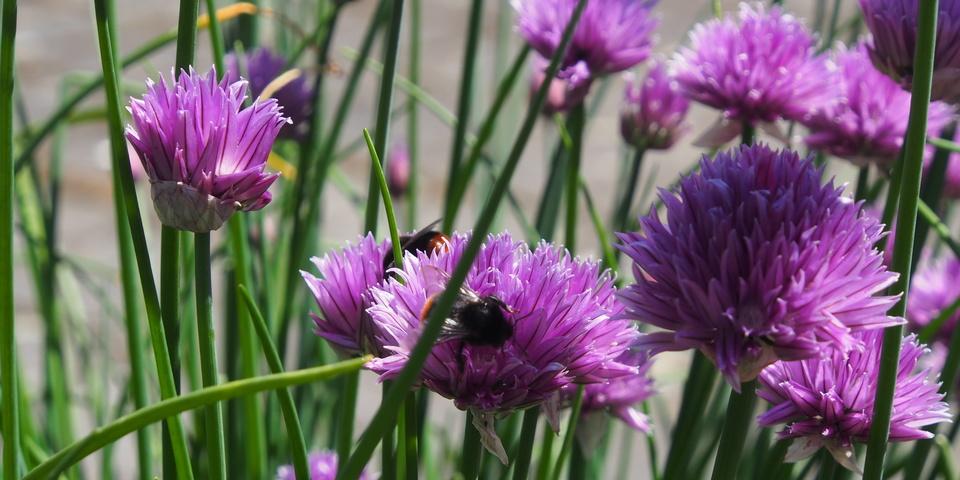 Bloemen met bijtjes