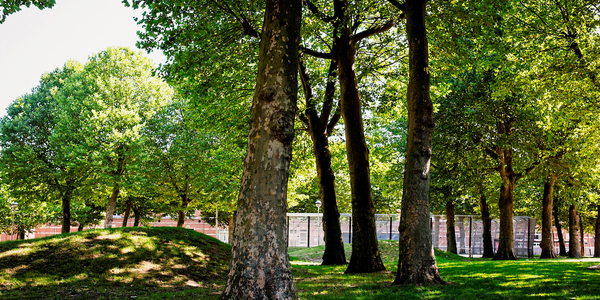 beeld van bomen en grasheuvels op het Stuivenbergplein