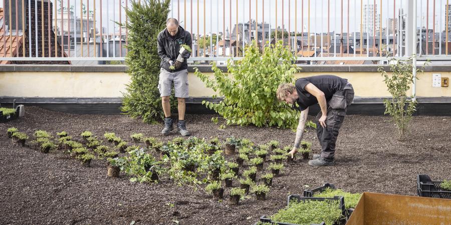 Mannen planten een groendak aan met verschillende planten en kruiden.