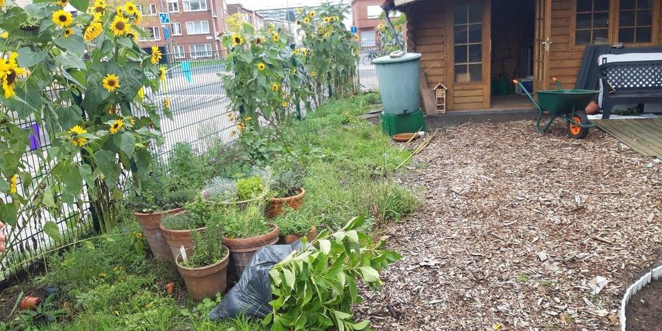 Bloemen, planten en kruiden in potten, samentuin