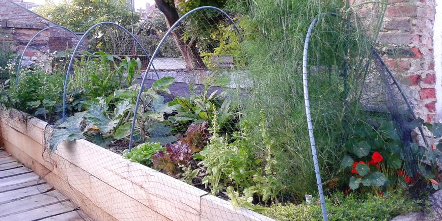 volgroeide kruiden en groenten in moestuinbakken