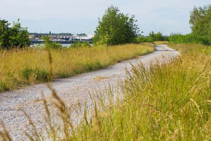Wandelweg naast de Schelde