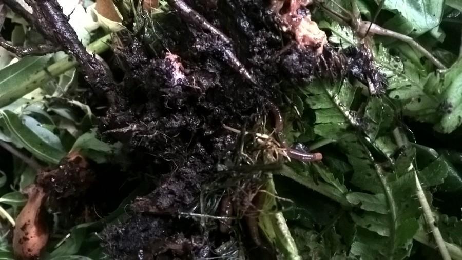 composteren kringlooptuin compostwormen compostvat plantwerpen