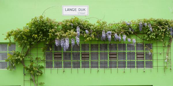 foto Lange Dijkstraat