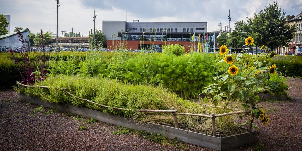 Op het plein voor het station komen buurtbewoners samen groenten kweken