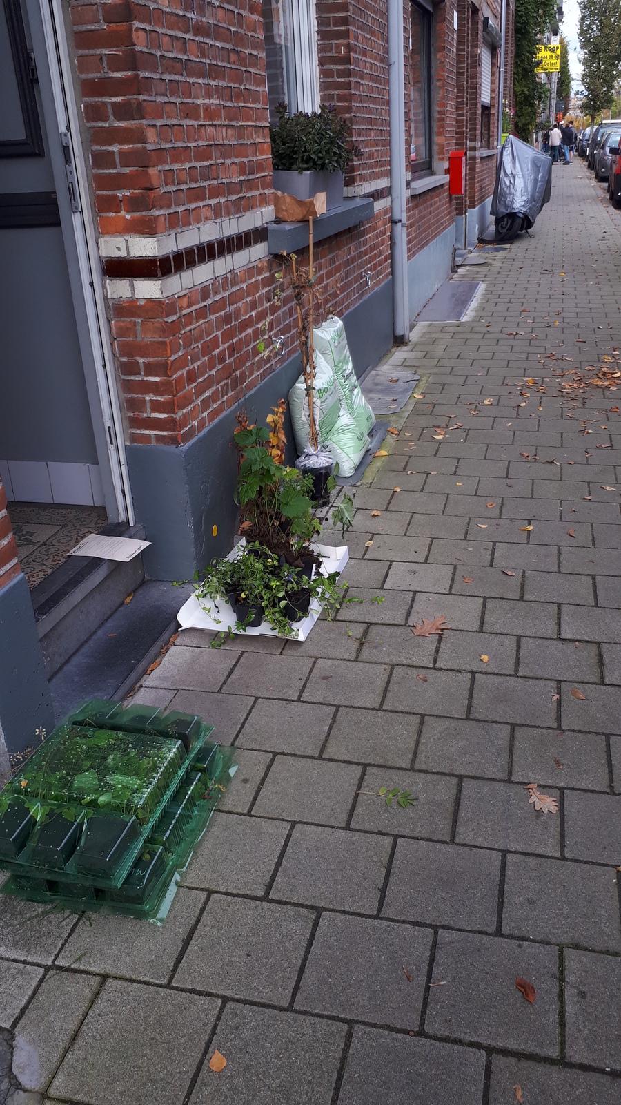 Planten geveltuintje