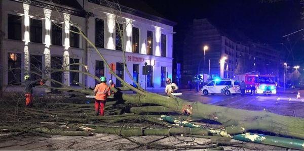 Omgevallen boom in Antwerpen bij storm 10-12 maart 2019