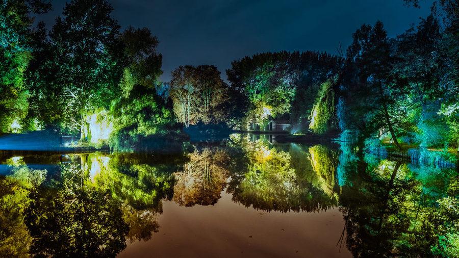 Verlichte bomen aan de rand van het water