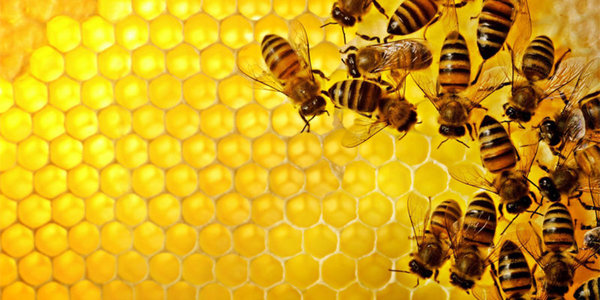 bijen in een honinggraad