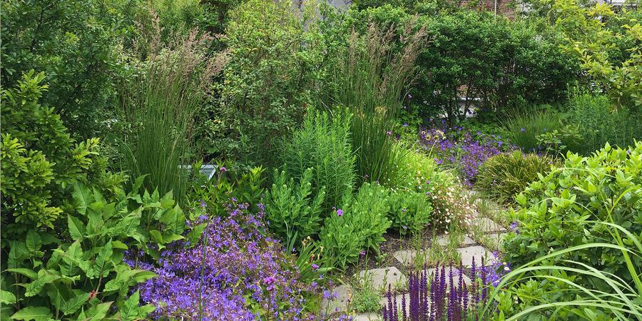 detail van de daktuin met paarse bloemen en veel groene planten