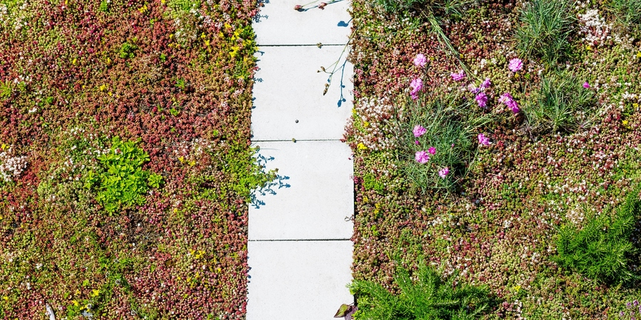 twee soorten groendaken op het dak van het EcoHuis. Links vetplanten en rechts vetplanten met kruiden.