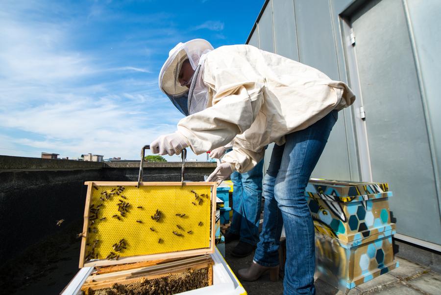 Imker haalt bijen uit bijenkast