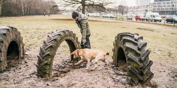 Hond loopt onder band in hondenloopspeeltuin.